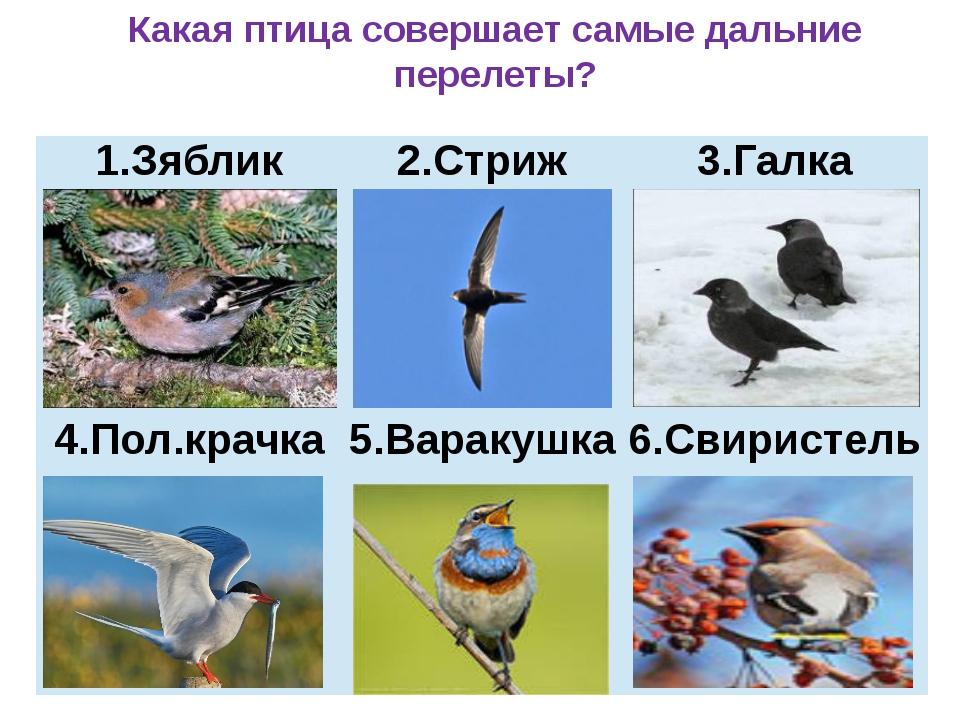Какая птица совершает самые дальние перелеты? Зяблик 2.Стриж 3.Галка 4.Пол.к...