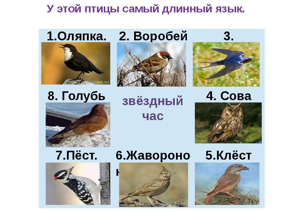 звёздный час У этой птицы самый длинный язык. 1.Оляпка. 2. Воробей 3. Ласточк...