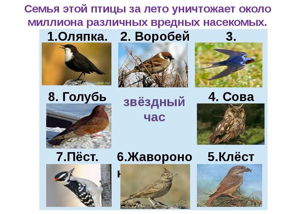 звёздный час Семья этой птицы за лето уничтожает около миллиона различных вре...