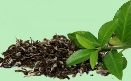 zeleniy-chay-450x278.jpg