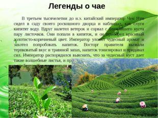 Как лекарство от многих болезней чай с древних лет чтят в Индии и Греции, в Т