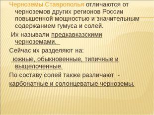 Черноземы Ставрополья отличаются от черноземов других регионов России повышен