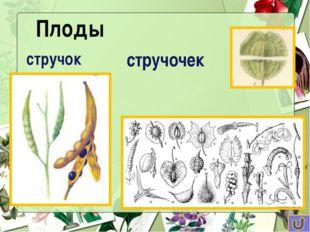 Какие растения «лишние»? лилия груша хрен капуста