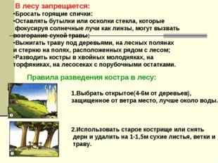 В лесу запрещается: Бросать горящие спички: Оставлять бутылки или осколки ст