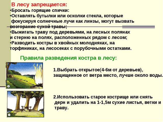 В лесу запрещается: Бросать горящие спички: Оставлять бутылки или осколки ст...