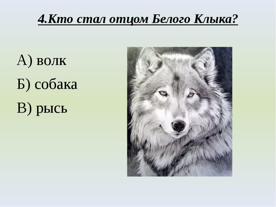 4.Кто стал отцом Белого Клыка? А) волк Б) собака В) рысь
