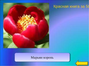 Марьин корень Красная книга за 50