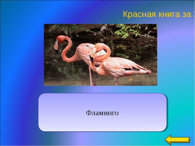 Красная книга за 10 Фламинго