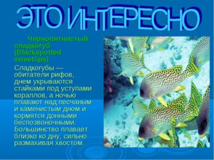 Чернопятнистый сладкогуб (Blackspotted sweetlips) 	Сладкогубы — обитатели р