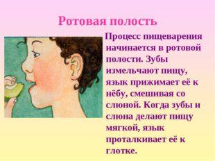 Ротовая полость Процесс пищеварения начинается в ротовой полости. Зубы измель