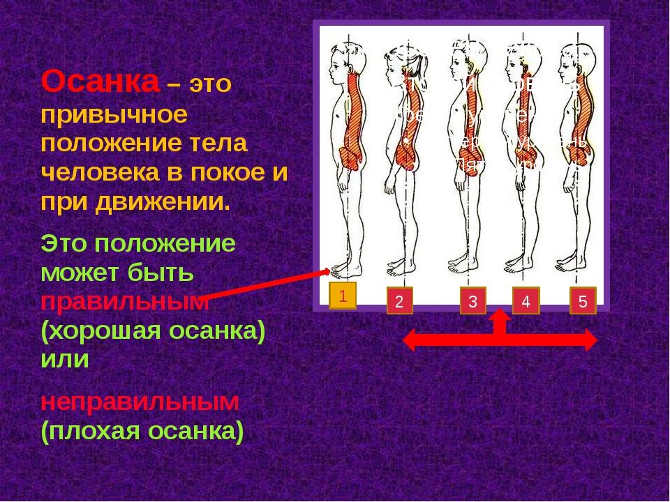 Осанка – это привычное положение тела человека в покое и при движении. Это по...