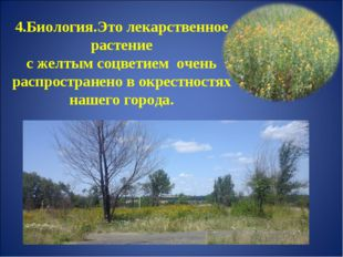 4.Биология.Это лекарственное растение с желтым соцветием очень распространен