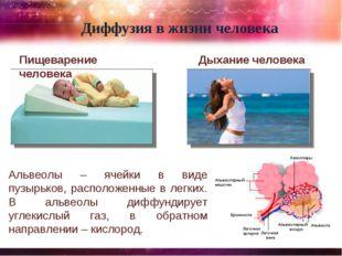 Пищеварение человека Диффузия в жизни человека Дыхание человека Альвеолы – яч