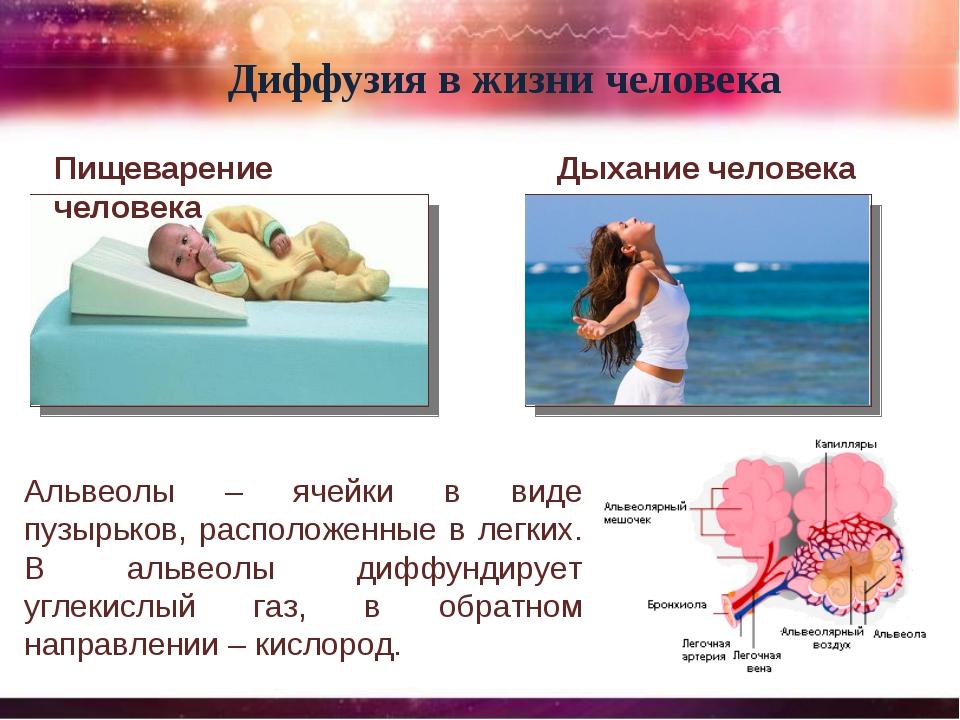 Пищеварение человека Диффузия в жизни человека Дыхание человека Альвеолы – яч...