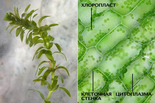 http://gigabaza.ru/images/63/125148/2e4fd85c.jpg
