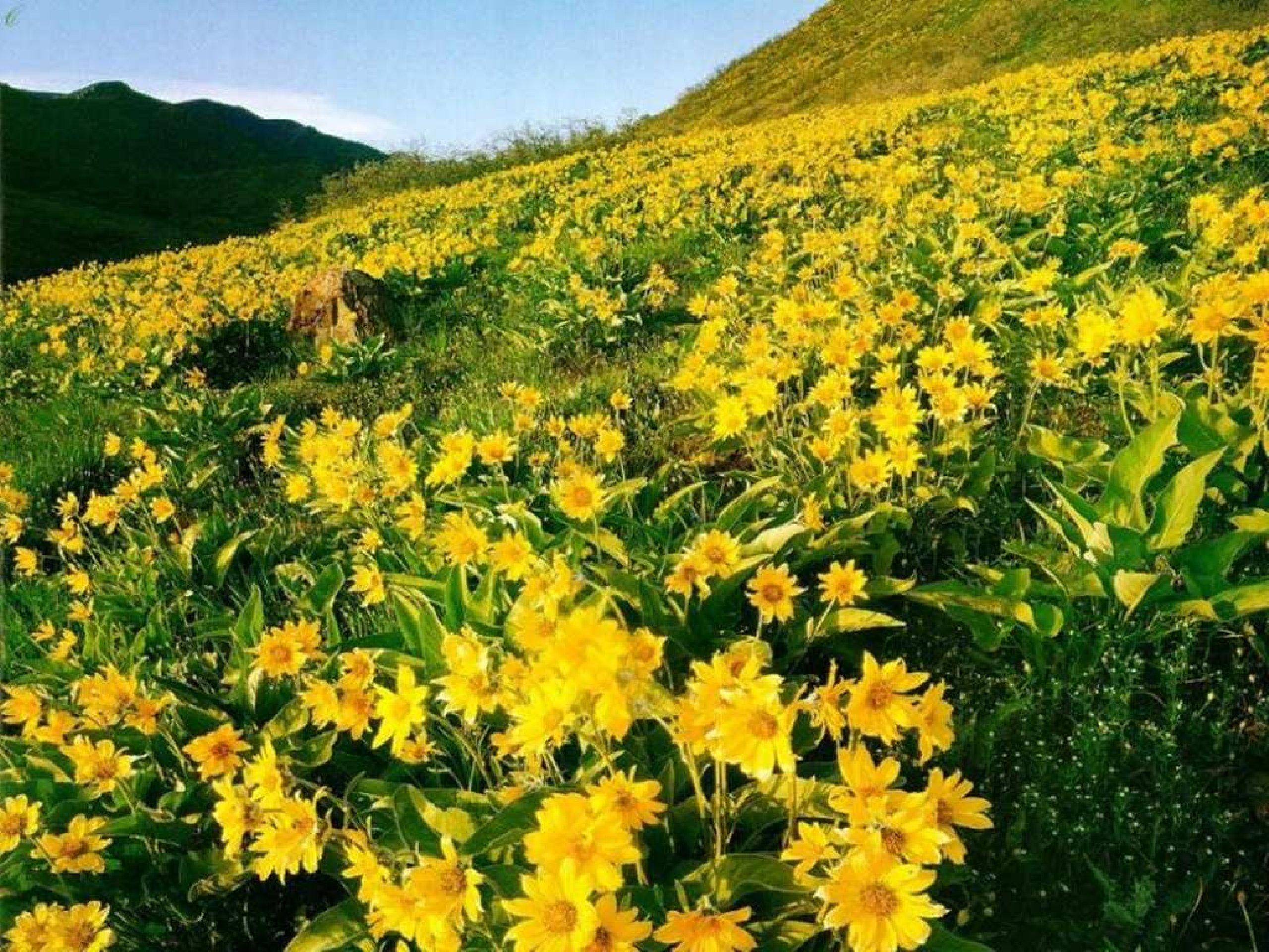 przyroda-kwiaty-2560-1920-2858.jpg