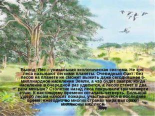 Вывод: Лес – уникальная экологическая система. Не зря леса называют легкими