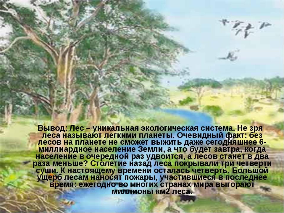 Вывод: Лес – уникальная экологическая система. Не зря леса называют легкими...