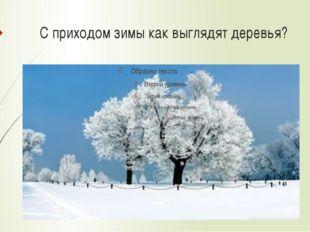 С приходом зимы как выглядят деревья?