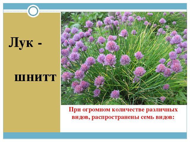 При огромном количестве различных видов, распространены семь видов: Лук - шнитт