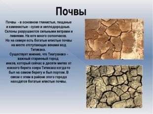 Почвы Почвы - в основном глинистые, пещаные и каменистые - сухие и неплодор