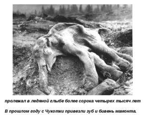 пролежал в ледяной глыбе более сорока четырех тысяч лет В прошлом году с Чуко