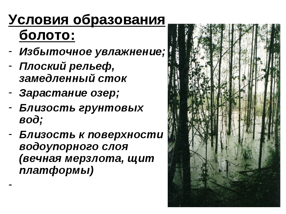 Условия образования болото: Избыточное увлажнение; Плоский рельеф, замедленны...