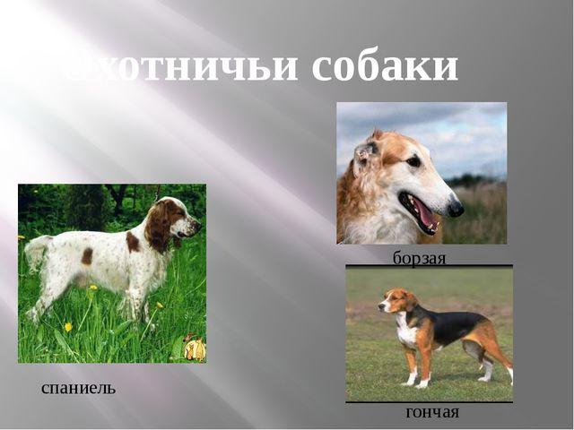 спаниель борзая гончая Охотничьи собаки
