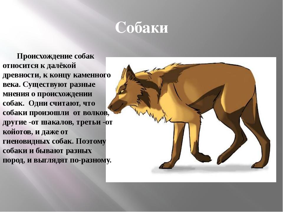 Собаки Происхождение собак относится к далёкой древности, к концу каменного в...