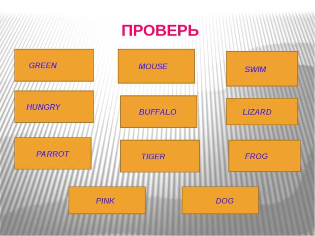 ПРОВЕРЬ GREEN MOUSE SWIM DOG LIZARD BUFFALO FROG PINK TIGER PARROT HUNGRY