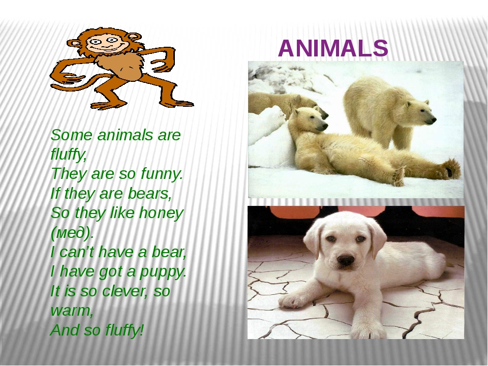 ANIMALS Some animals are fluffy, They are so funny. If they are bears, So th...