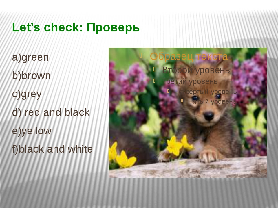 Let's check: Проверь a)green b)brown c)grey d) red and black e)yellow f)black...