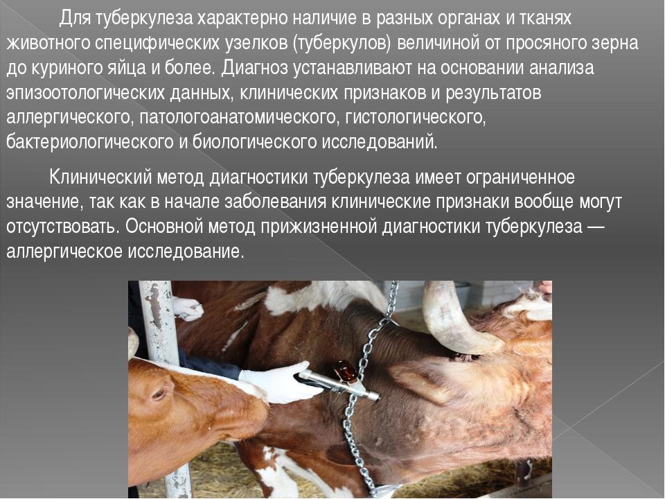 Для туберкулеза характерно наличие в разных органах и тканях животного специ...