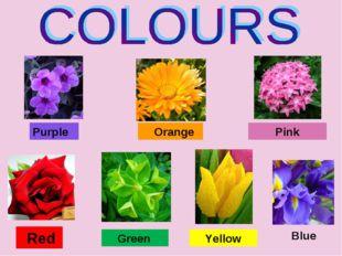 Purple Orange Red Green Yellow Pink Blue