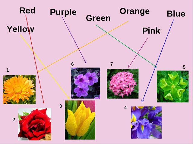 Yellow Orange Purple Green Blue Red 1 2 3 4 5 6 Pink 7
