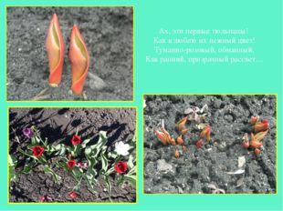 Ах, эти первые тюльпаны! Как я люблю их нежный цвет! Туманно-розовый, обманны