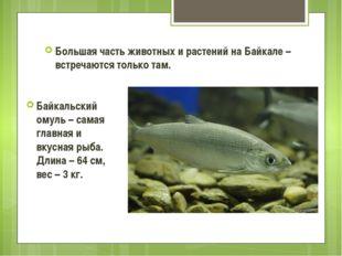 Большая часть животных и растений на Байкале – встречаются только там. Байкал