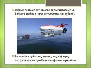 Учёные считают, что многие виды животных на Байкале ещё не открыты (особенно