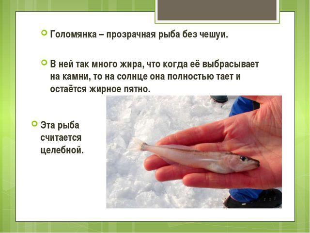 Голомянка – прозрачная рыба без чешуи. В ней так много жира, что когда её выб...
