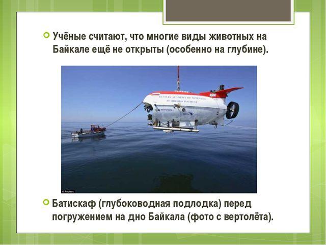 Учёные считают, что многие виды животных на Байкале ещё не открыты (особенно...