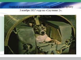 Первый космонавт – собака Лайка. Выведена на орбиту 3 ноября 1957 года на «С