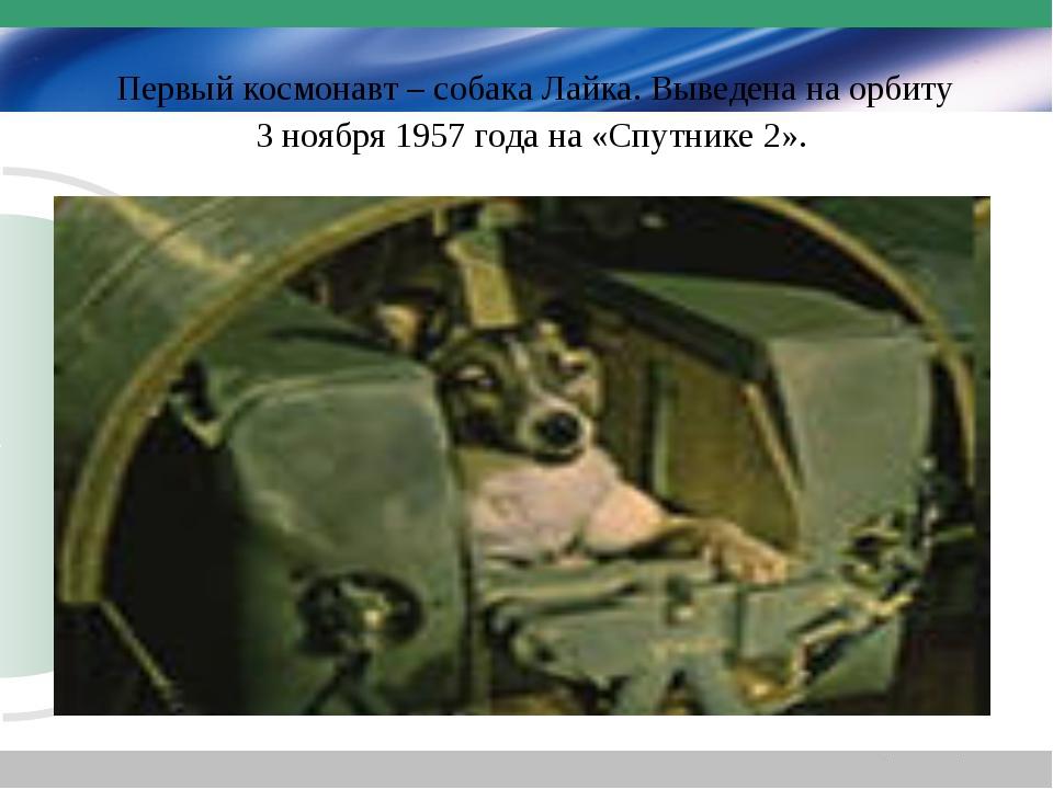 Первый космонавт – собака Лайка. Выведена на орбиту 3 ноября 1957 года на «С...