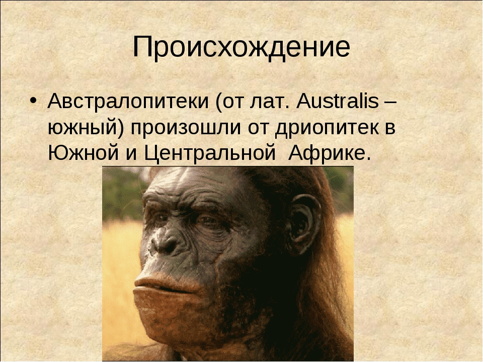 Происхождение Австралопитеки (от лат. Australis – южный) произошли от дриопит...