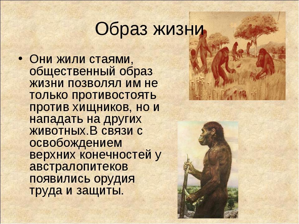 Образ жизни Они жили стаями, общественный образ жизни позволял им не только п...