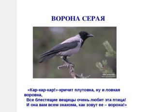 ВОРОНА СЕРАЯ «Кар-кар-кар!»-кричит плутовка, ну и ловкая воровка, Все блестящ