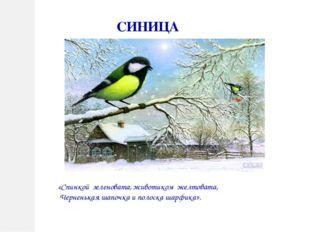СИНИЦА «Спинкой зеленовата, животиком желтовата, Черненькая шапочка и полоска