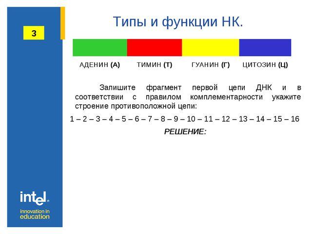 Типы и функции НК. Запишите фрагмент первой цепи ДНК и в соответствии с пра...