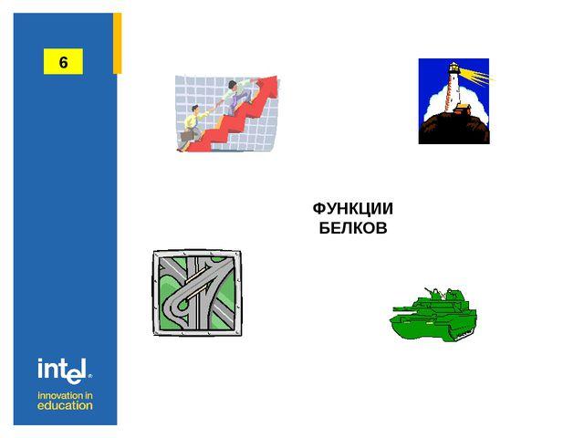 ФУНКЦИИ БЕЛКОВ 6