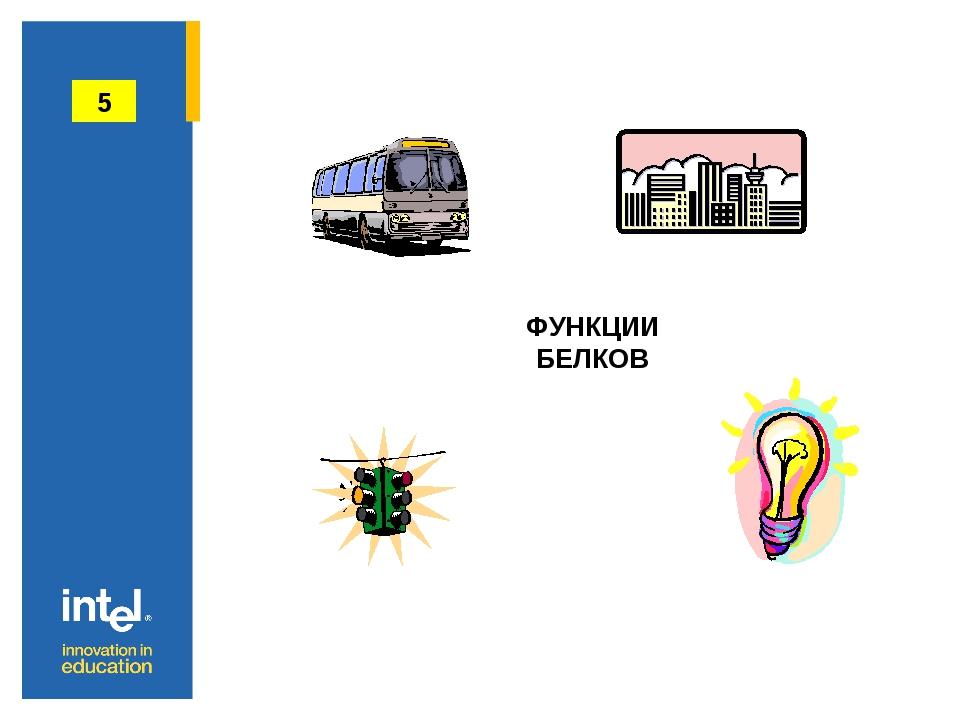 ФУНКЦИИ БЕЛКОВ 5