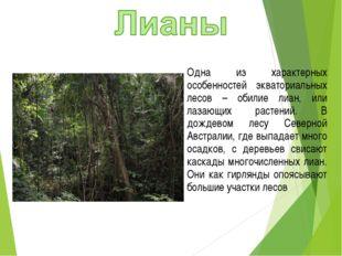 Одна из характерных особенностей экваториальных лесов – обилие лиан, или лаза